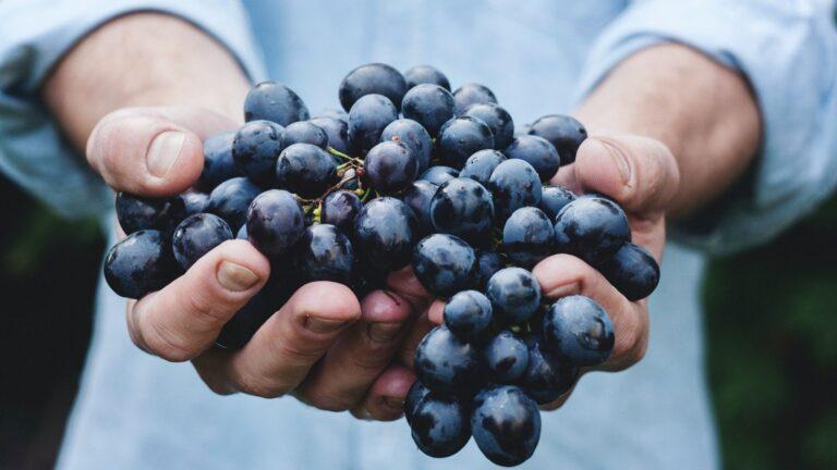 Vruchtdragen als levensdoel Johannes 15 Christelijke blog Dochters van de Koning